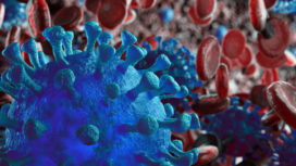 Coronavirus under the microscope.
