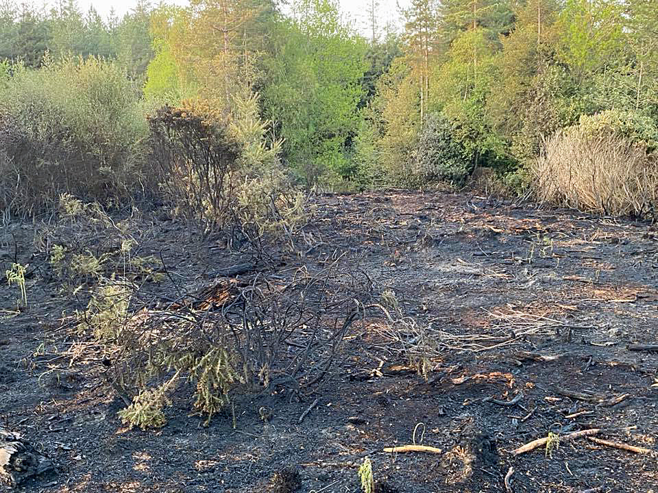Scorched heath after Puddletown Forest fire