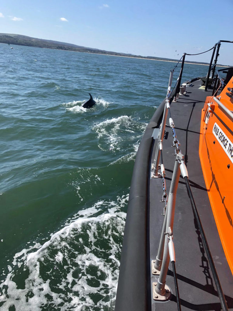 Dolphin swimming in wake of Swanage Lifeboat
