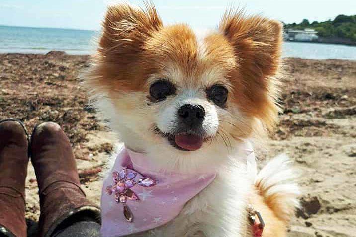 Dog called Jennifer on Swanage Beach