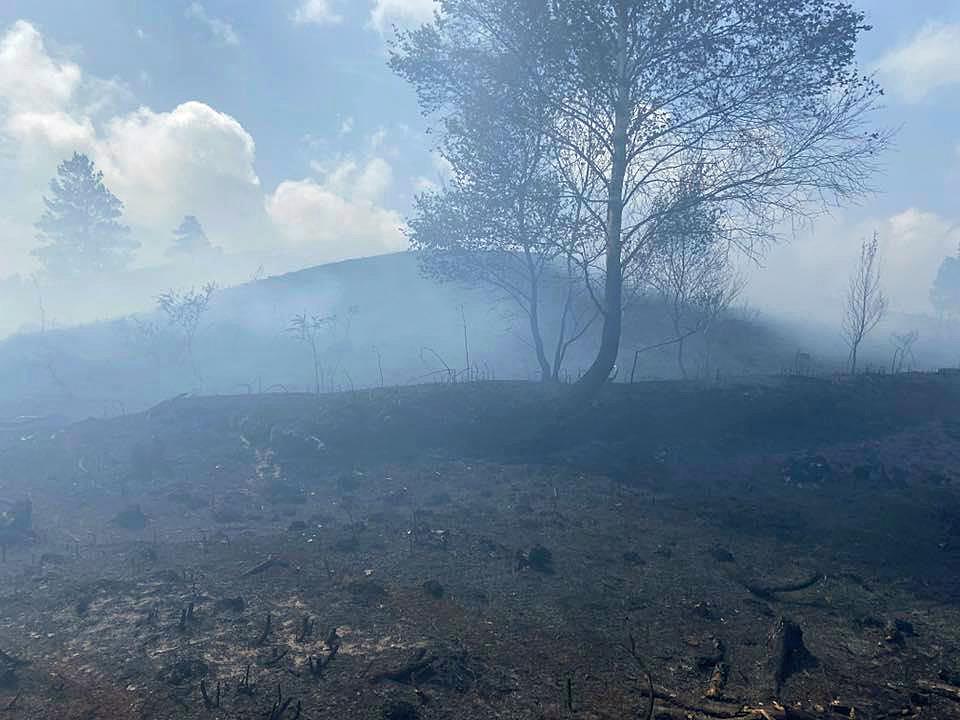 Fire destruction in Wareham Forest.
