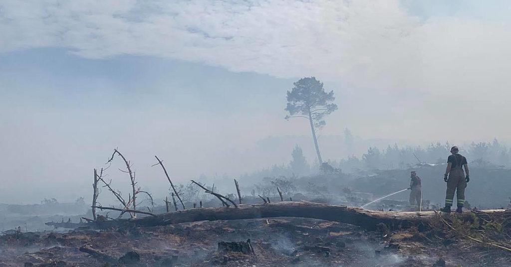 Fire destruction in Wareham Forest