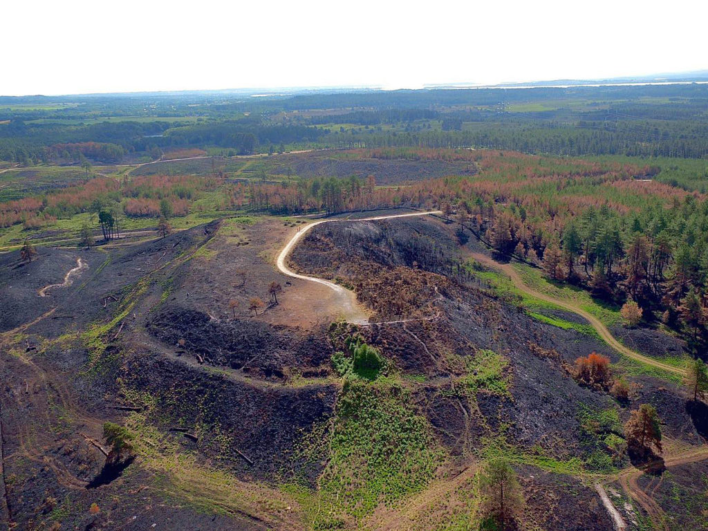 Scorched heath at Wareham Forest viewed from a drone