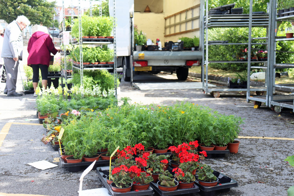 Plants for sale at Swanage Market