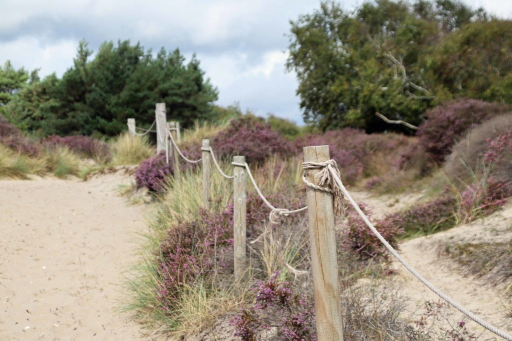 Area of Studland dunes that has been roped off