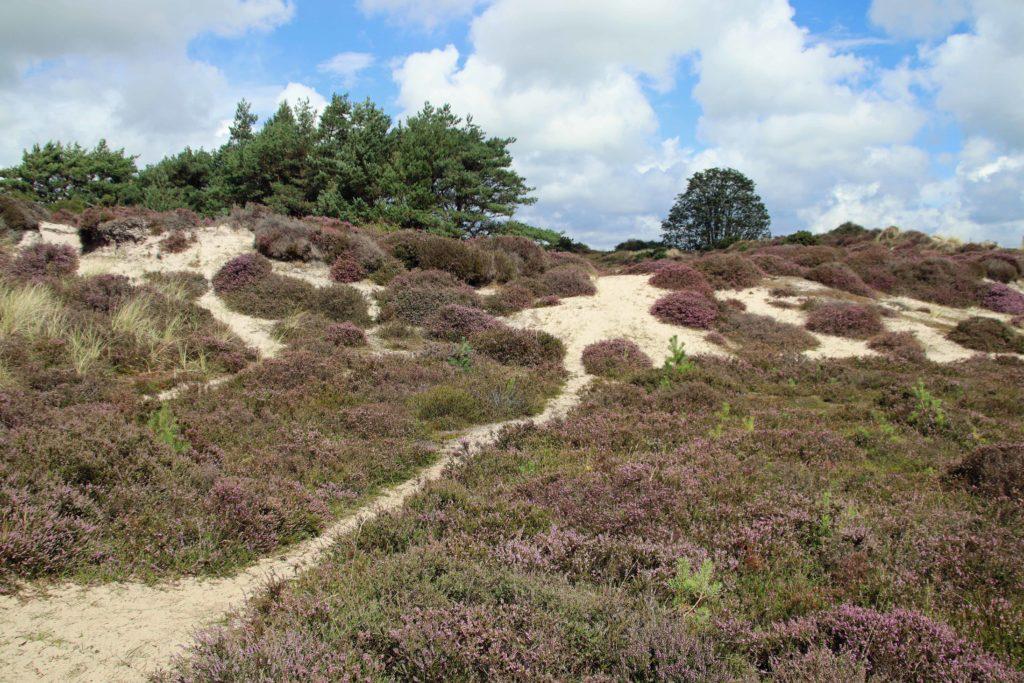 Studland dunes