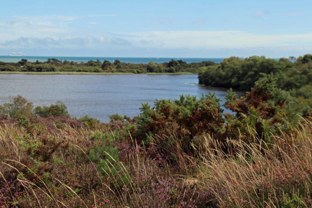 Little Sea in Studland