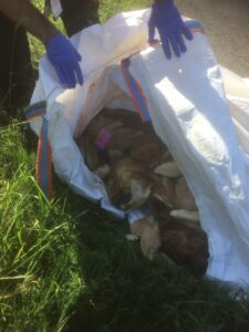 Fly-tipped meat in Purbeck described as 'disgusting'
