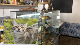 Cat and inside of Trevor's deli
