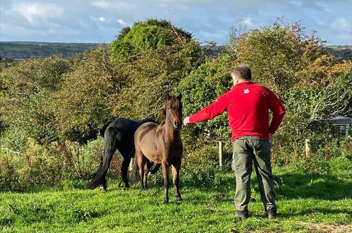 Horses at Studland