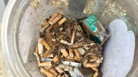 cigarette butts collected from the beach