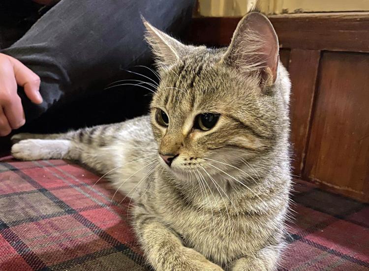Trevor the cat