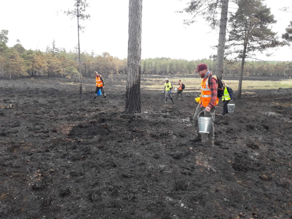 Aftermath of Wareham Forest fire