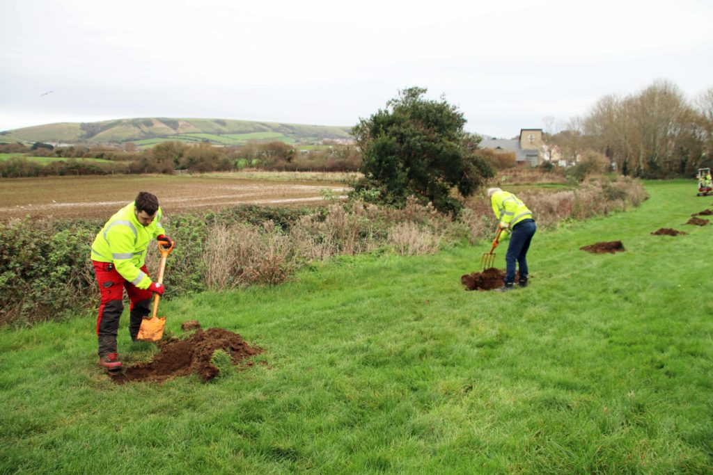 Swanage tree planting