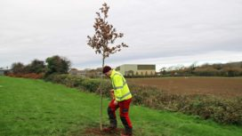 Swanage tree planting