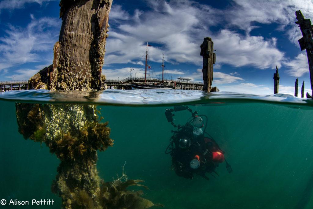 Diving under Swanage Pier