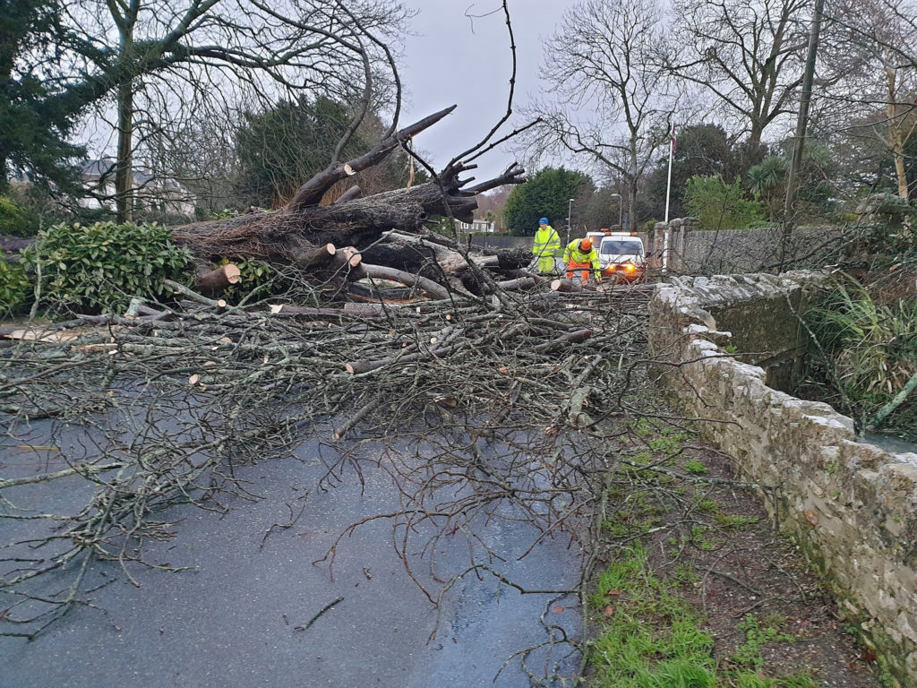 Fallen tree in Storm Bella