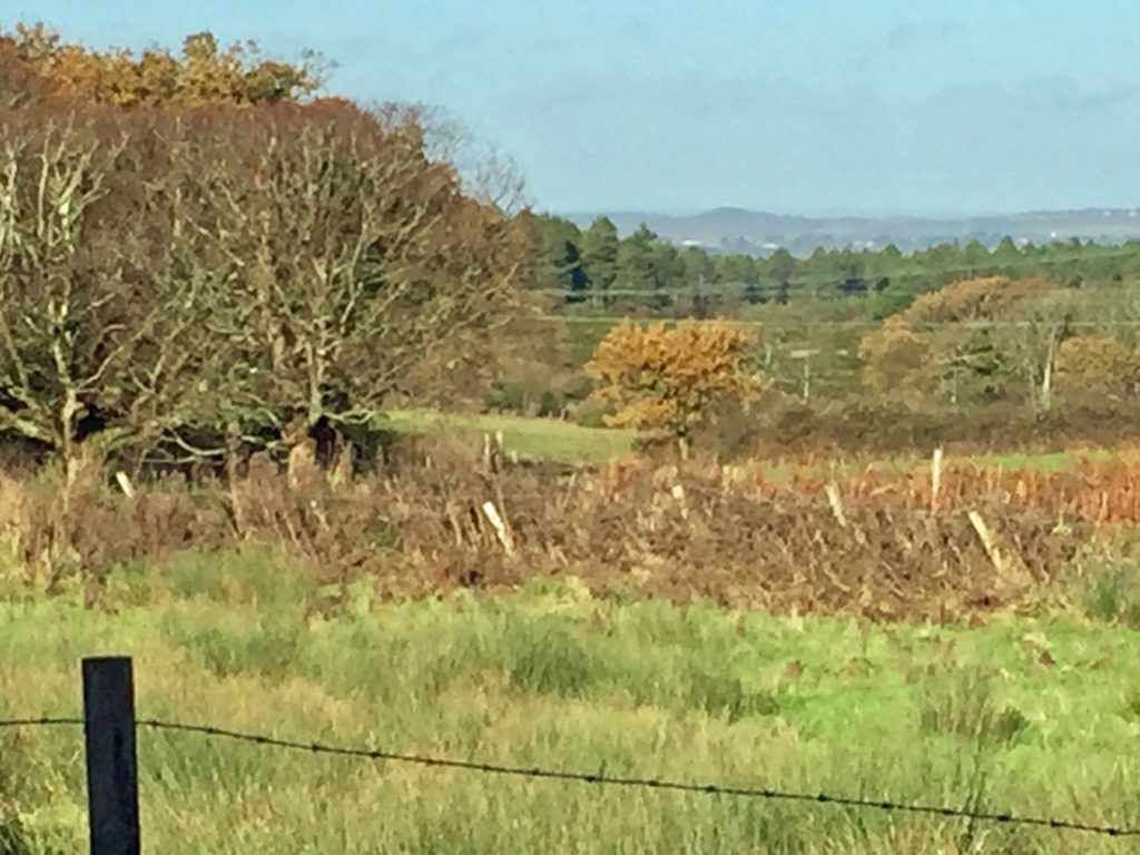 Rempstone in Purbeck