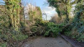 Fallen tree blocks Darkie Lane in Swanage
