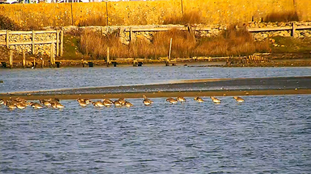 Poole Harbour webcam