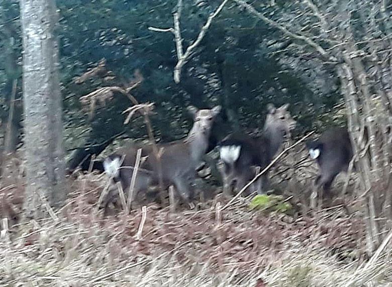 Purbeck Police Deer Studland