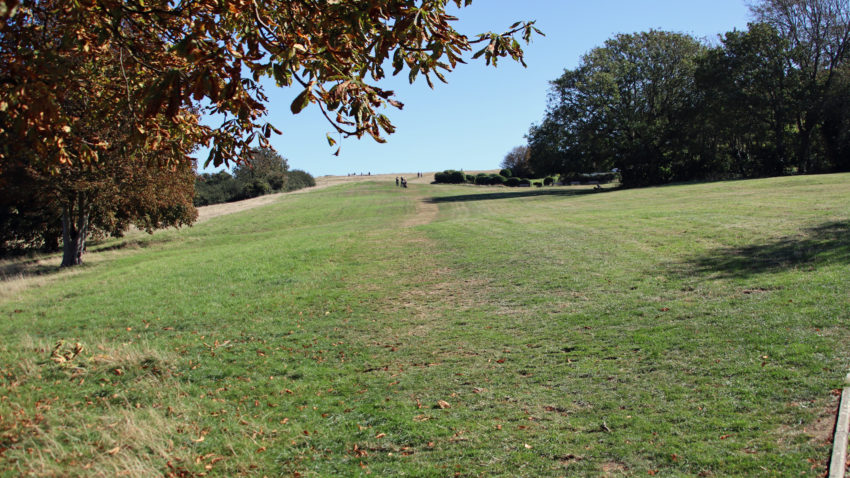 Swanage Downs