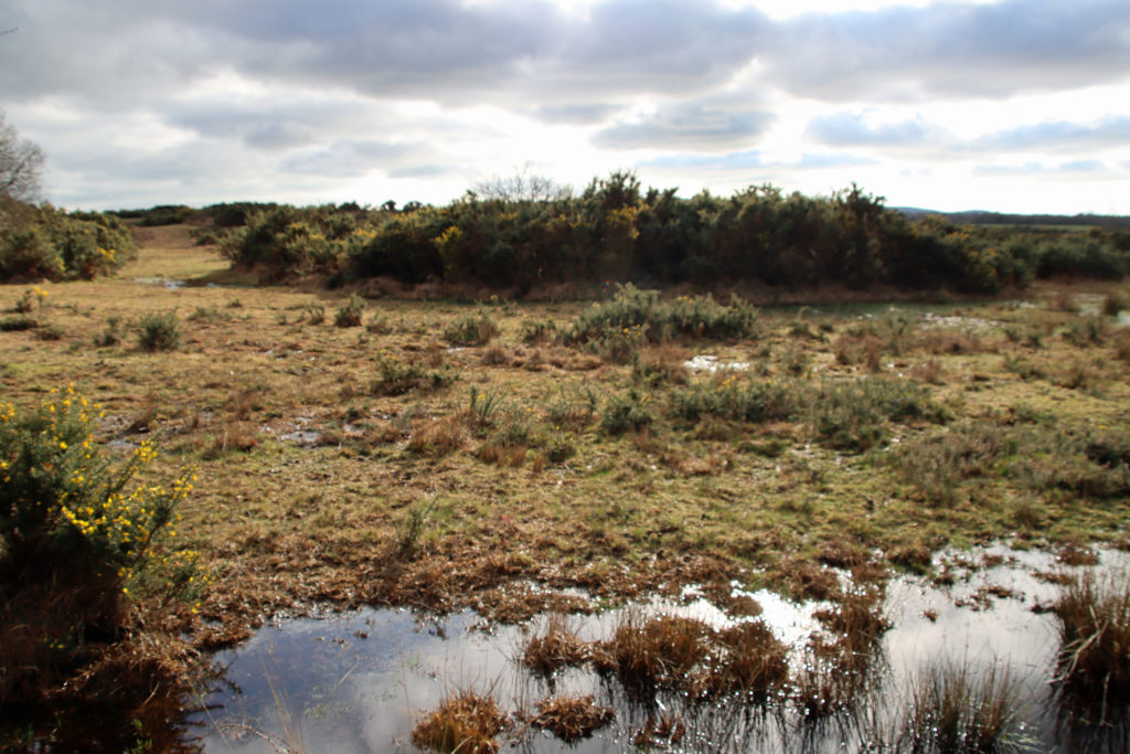 Purbeck Heathland