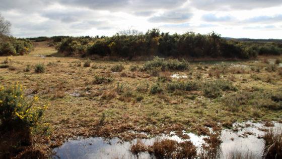 Purbeck Heathland