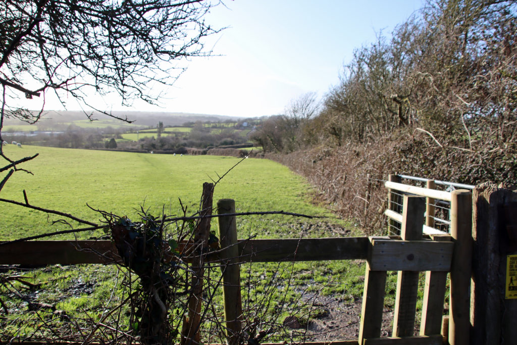 One of the fields in Swanage, where housing in proposed