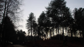 Trees in Wareham forest