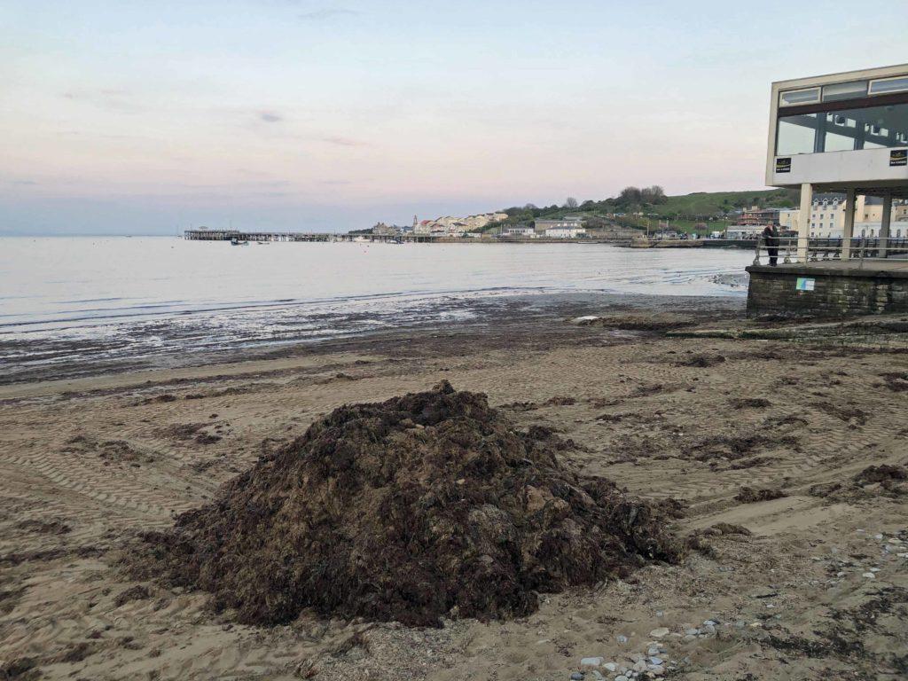 pile of seaweed