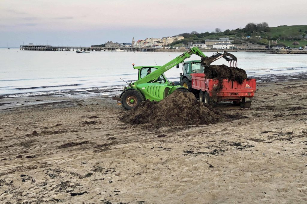 digger removing seaweed from the beach