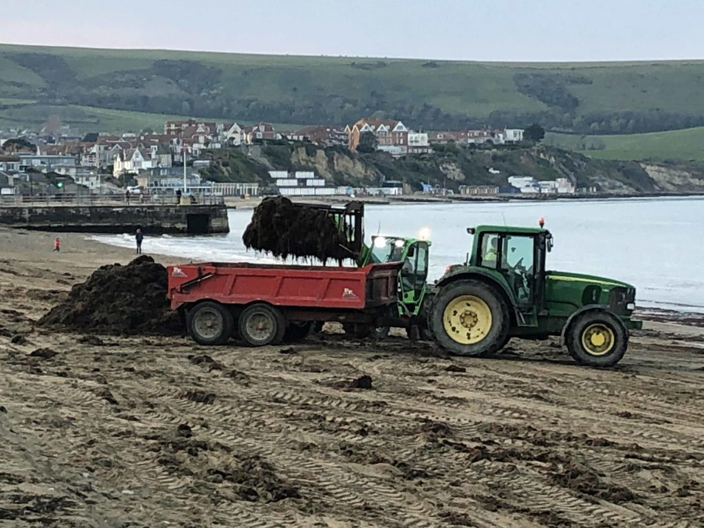 Seaweed being removed from the beach