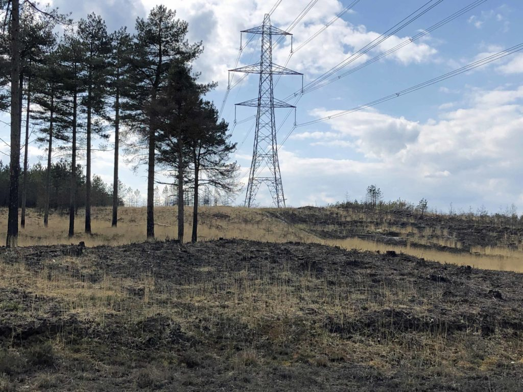 Wareham Forest a year after the fire
