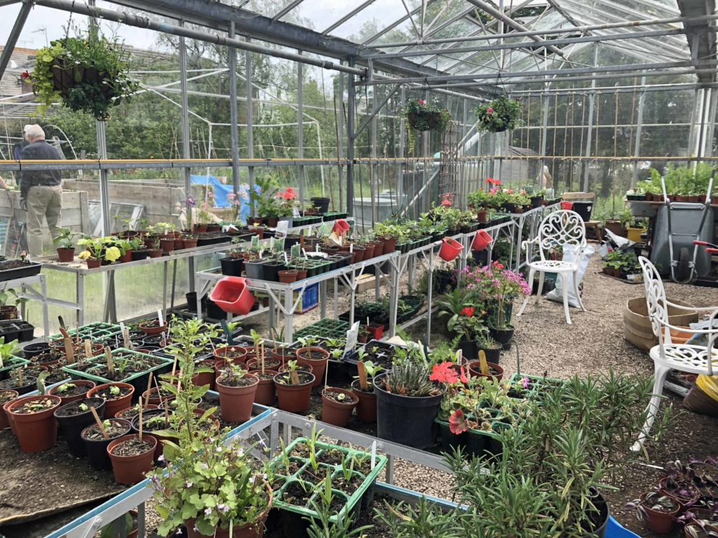 In the greenhouse at the Greengage Project