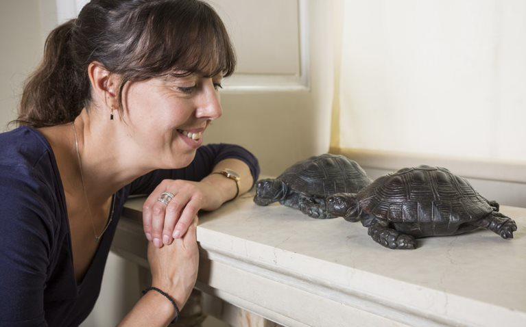 Bronze tortoises
