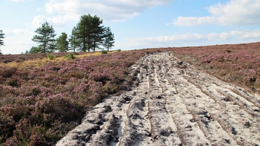Strip of bare land on Purbeck heath