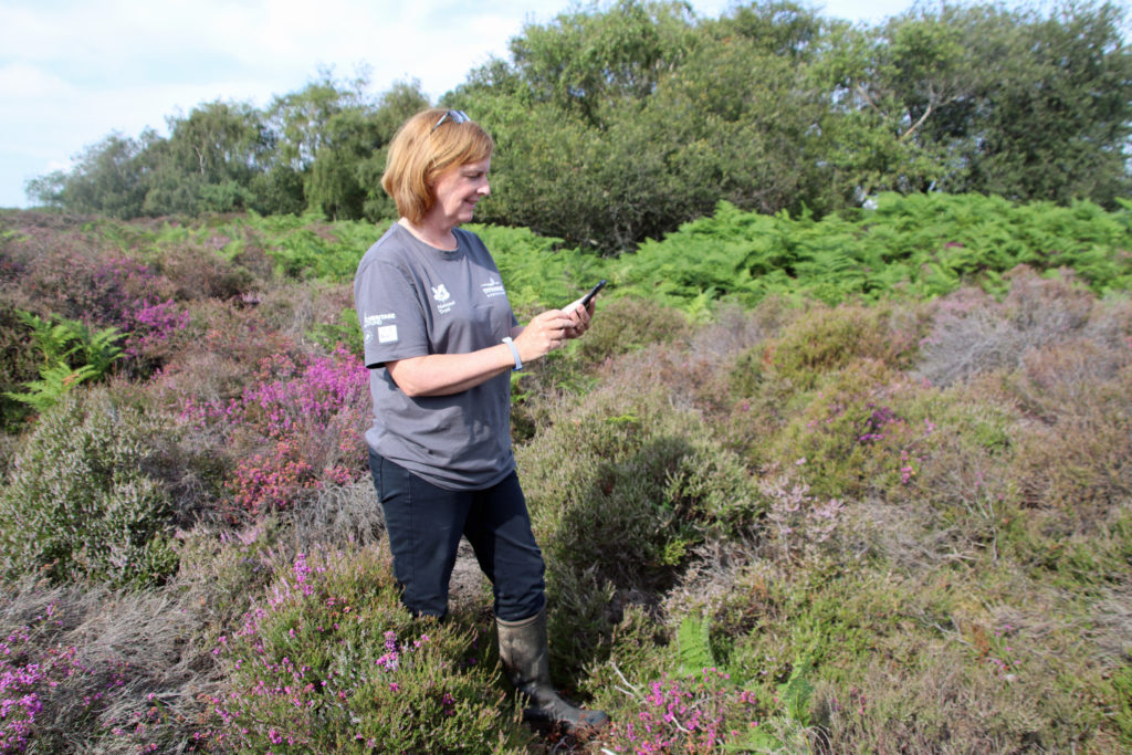Sally Wallington, Dynamic Dunescapes project officer
