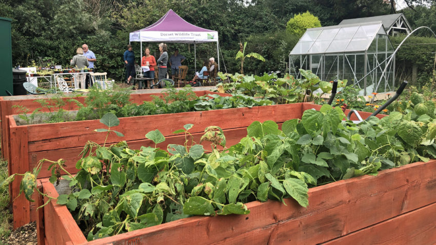 Raised beds at the Greengage Project