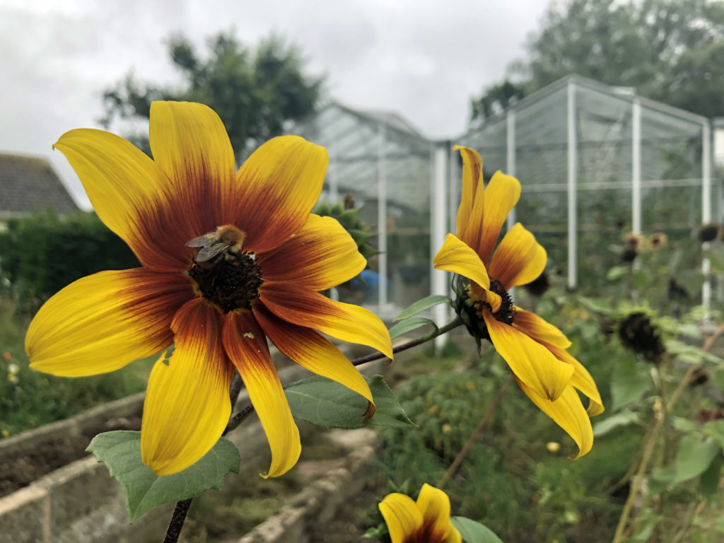 Flowers at the Greengage Project