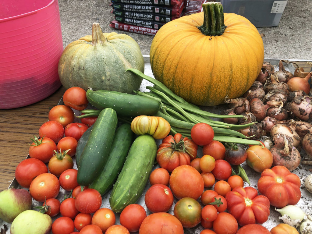 vegetables at the Greengage Project