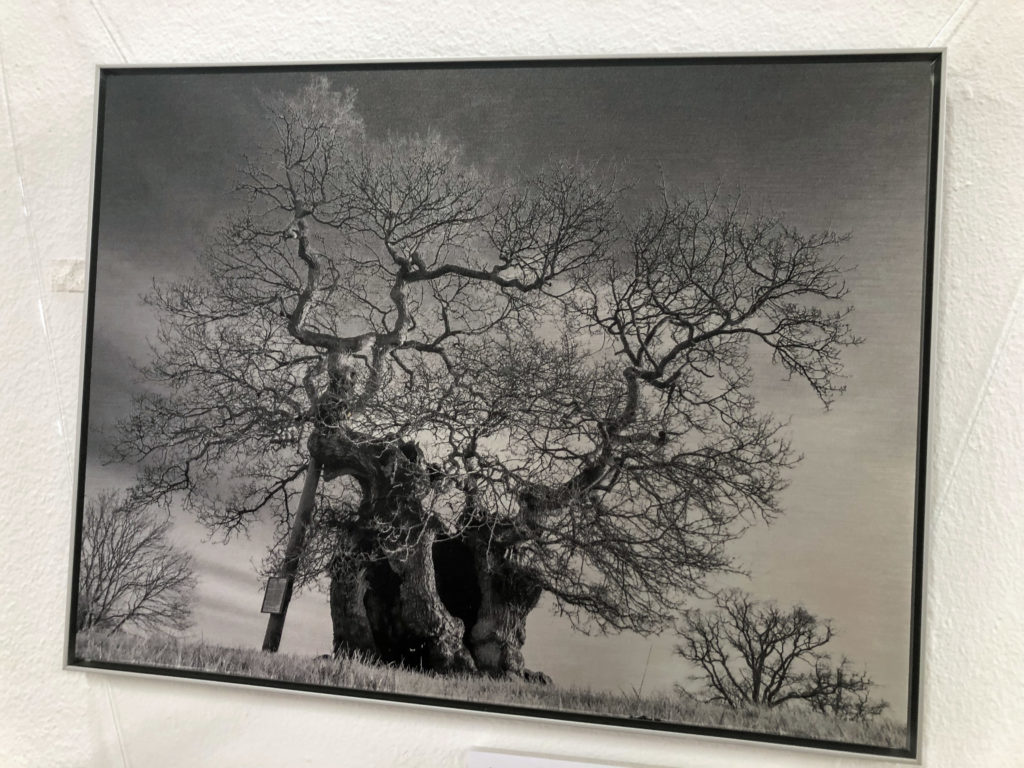 Tree picture at Rollington Barn Exhibition